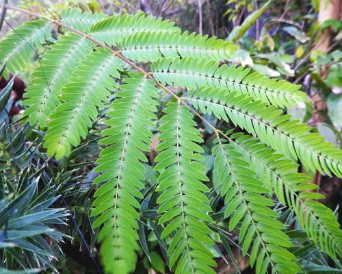 solucoes--florestas-nativas-3