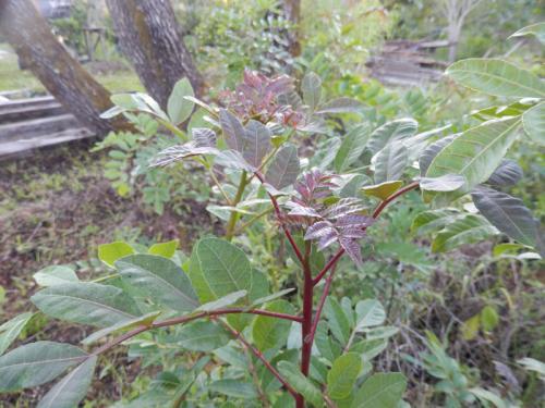 Plantavita
